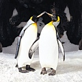 Penguins Kissing.JPG