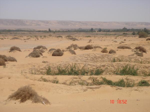 07 0604 egypt 629.jpg
