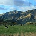 090408絕美南島紐西蘭 1706.jpg