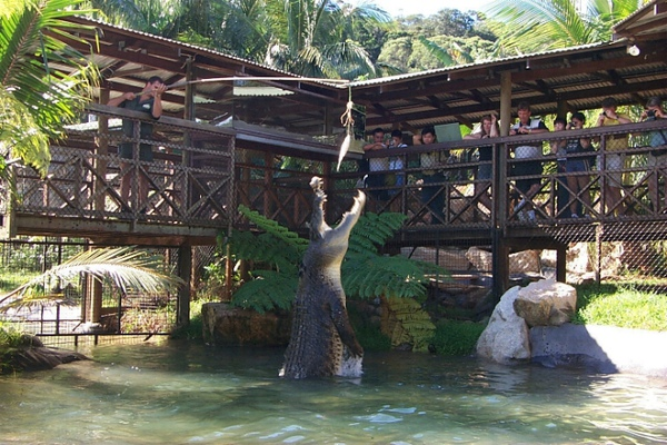 rainforest12.JPG