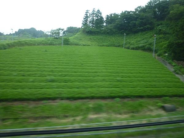 新幹線10.JPG