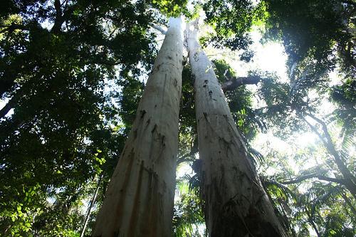 Mary Cairnscross park1(sunshine).jpg