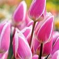 spring_004.jpg