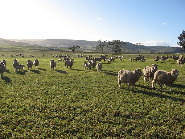 tasmania5(farm).JPG