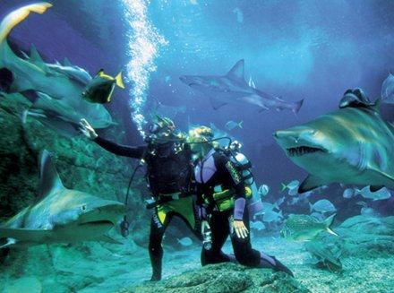 underwater3(sunshine).jpg