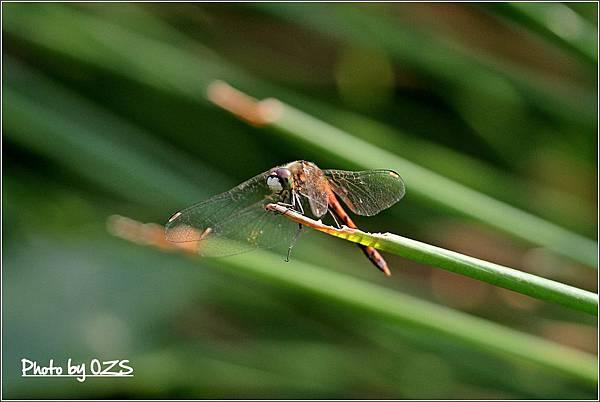 長尾雄蟲2