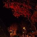 超美的夜晚「嘿嘿嘿  聽說台北這夜下大雨!!」