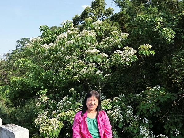 五月雪的序曲~福至興林