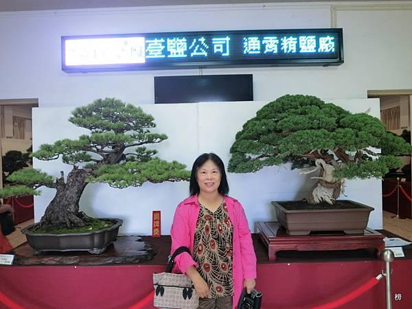大自然美麗的縮影~台灣省松柏盆栽展覽