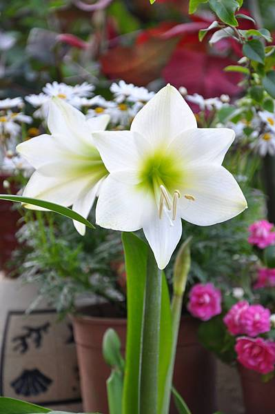 白色花園 (7).JPG
