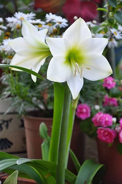 白色花園 (8).JPG