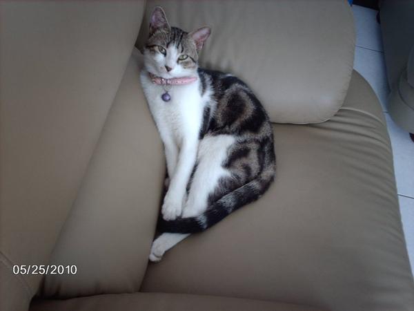 cat searching.jpg