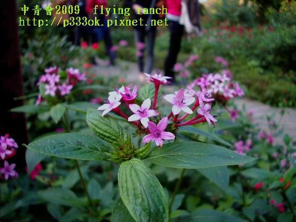 fly2222.jpg