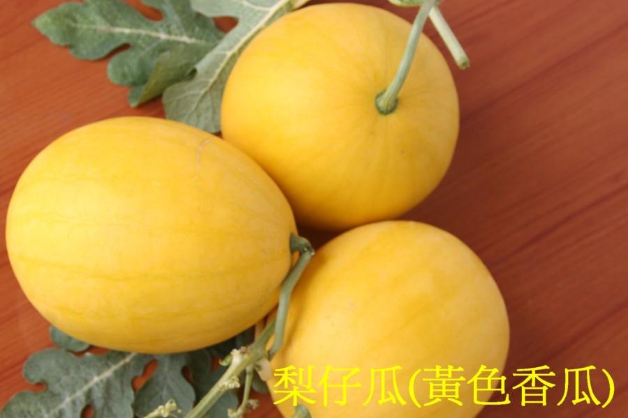 24梨仔瓜(黃色香瓜)