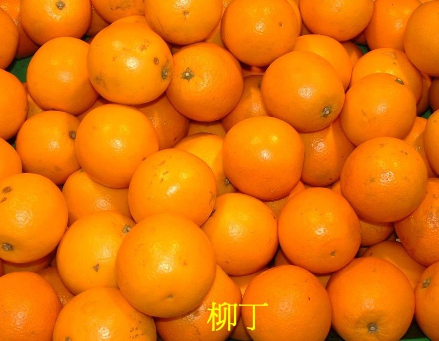 05 柳丁