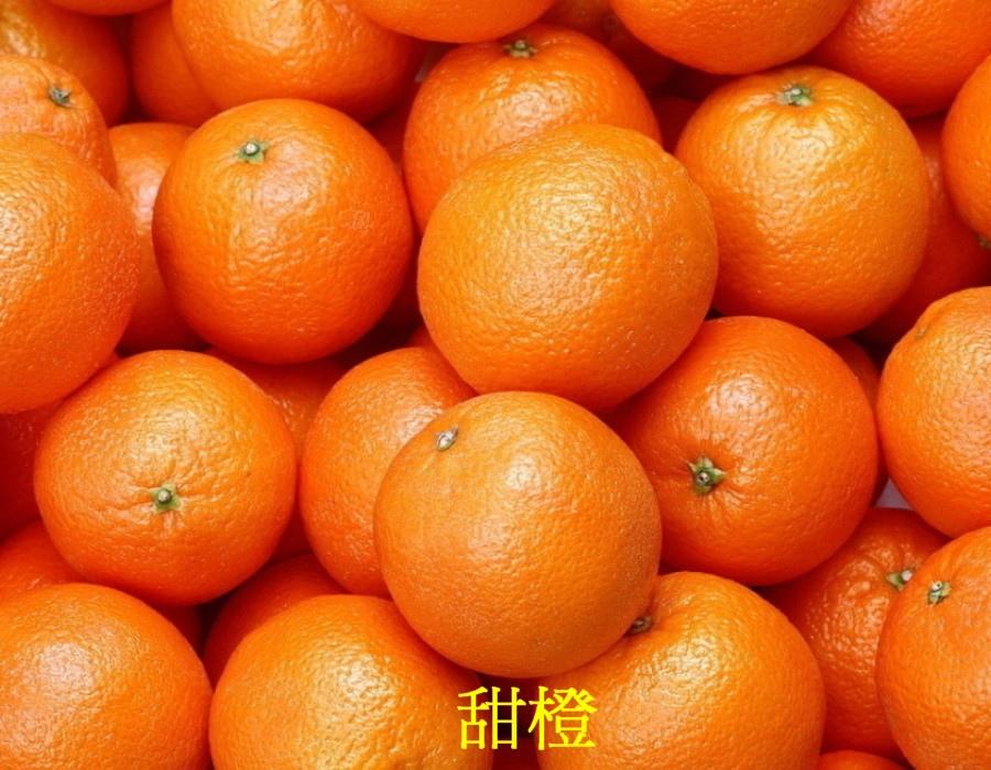 06 甜橙