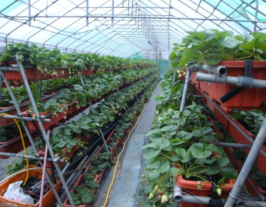 03 草莓園高架a
