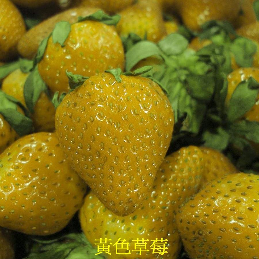 05 黃色草莓