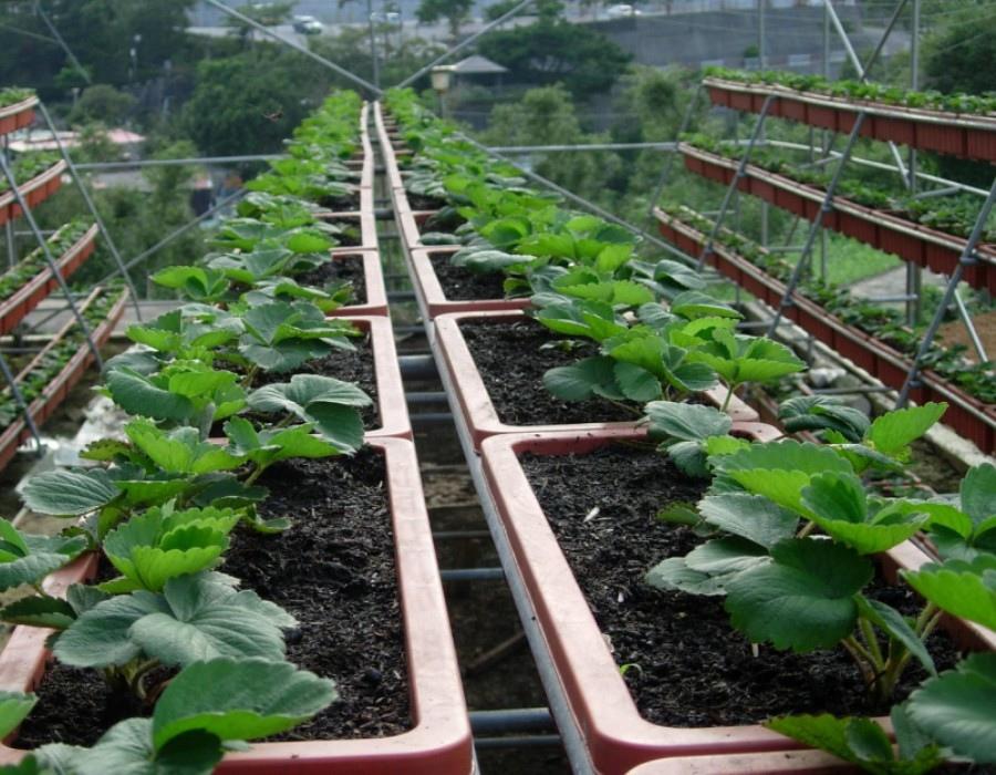 03 草莓園高架