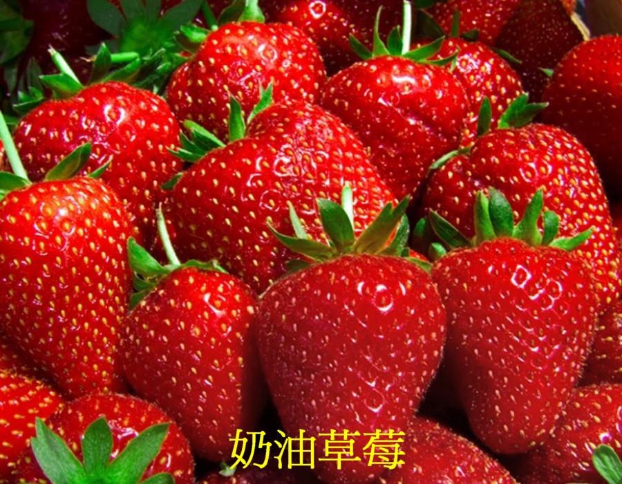 03 草莓c