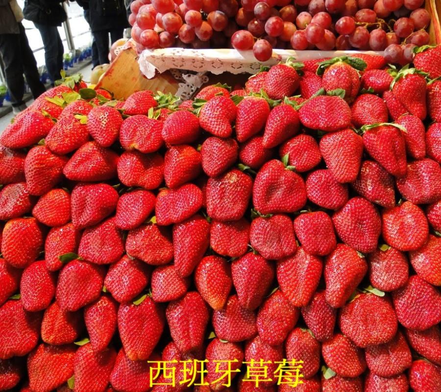 05 西班牙草莓