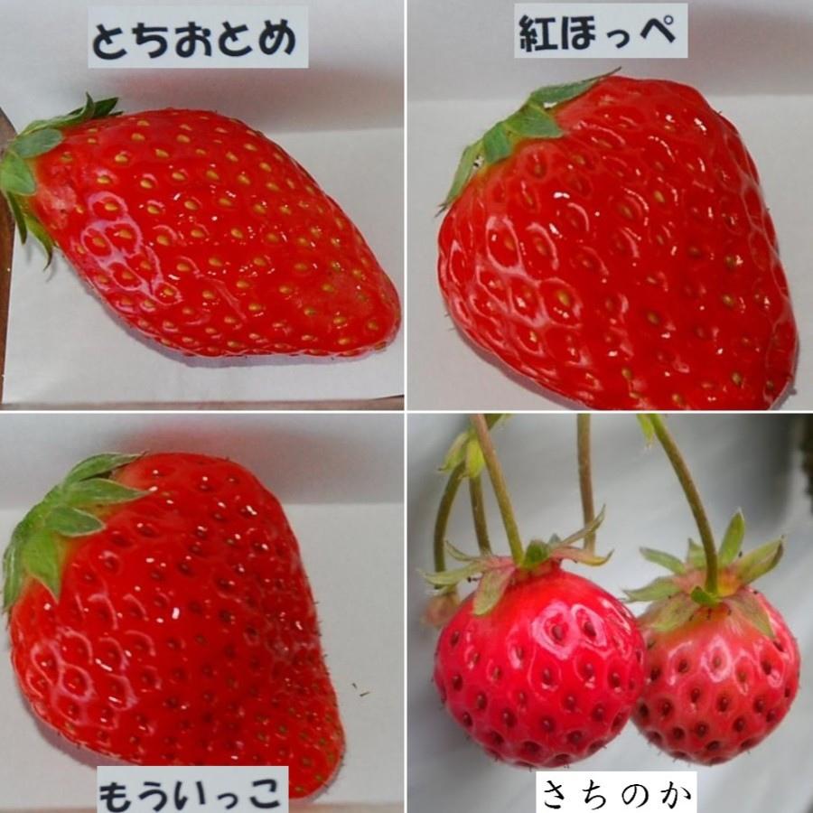 13 日本草莓