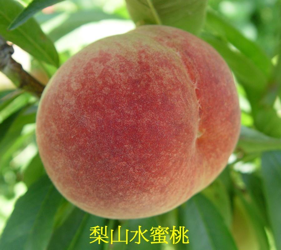 02 梨山水蜜桃
