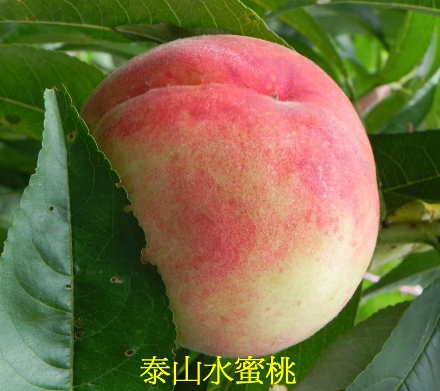 06 泰山水蜜桃