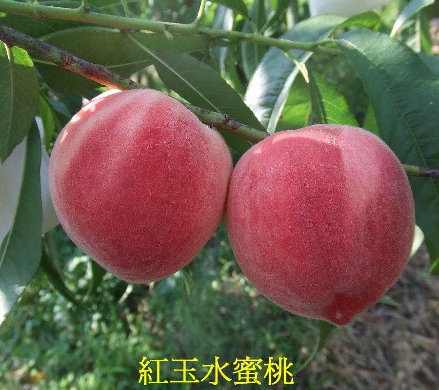 05 紅玉水蜜桃