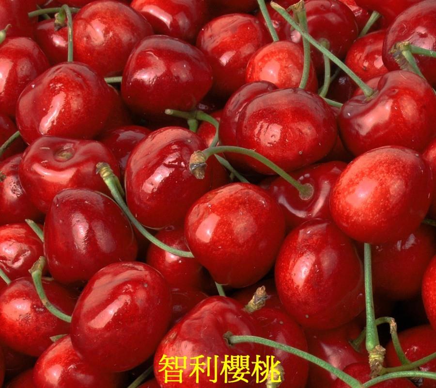17 智利櫻桃