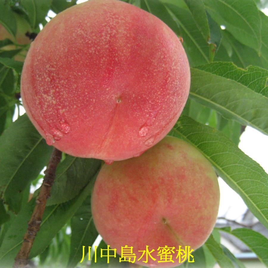 09 川中島水蜜桃