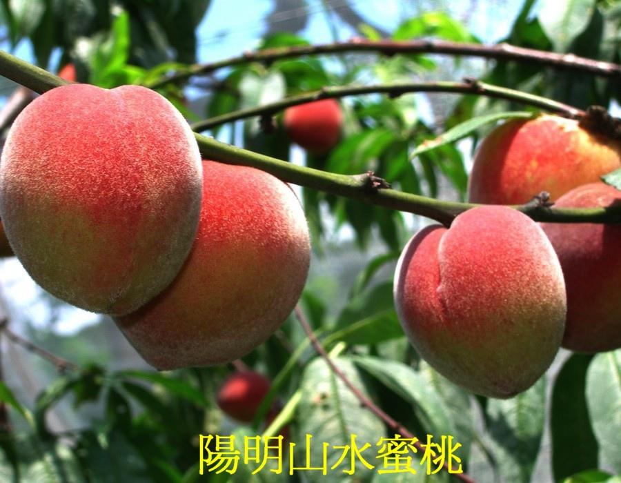 03 陽明山水蜜桃