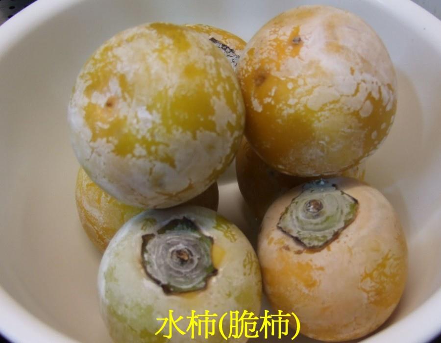 02 水柿(脆柿)