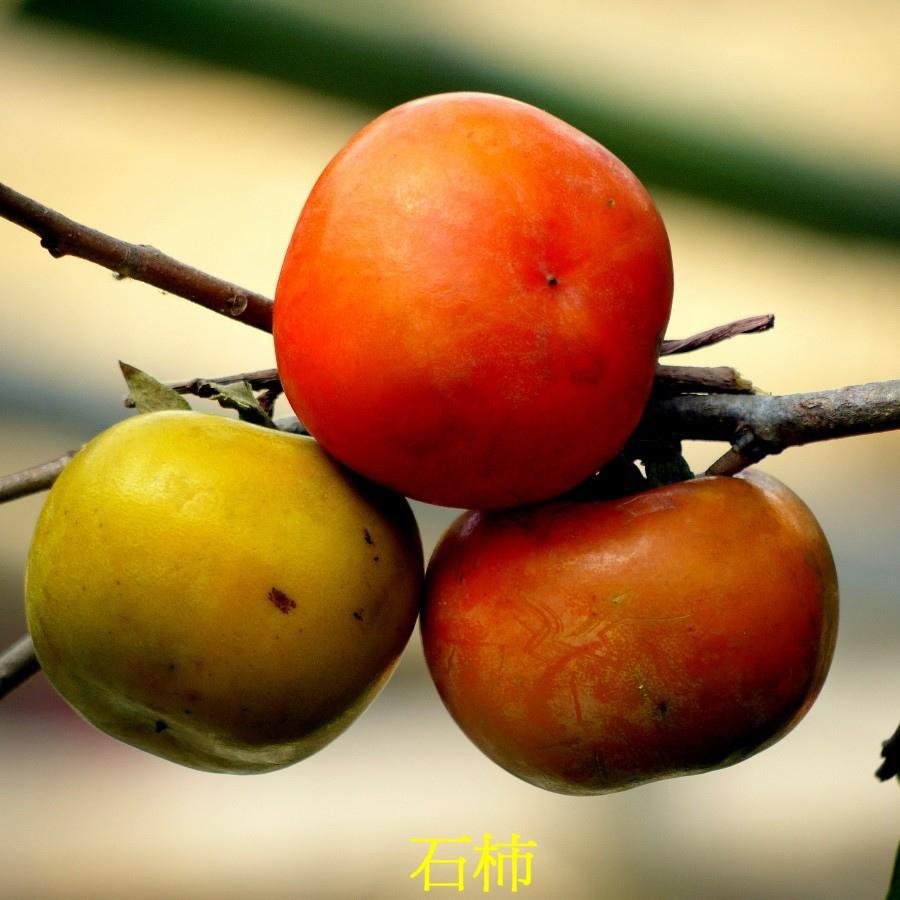 02 石柿