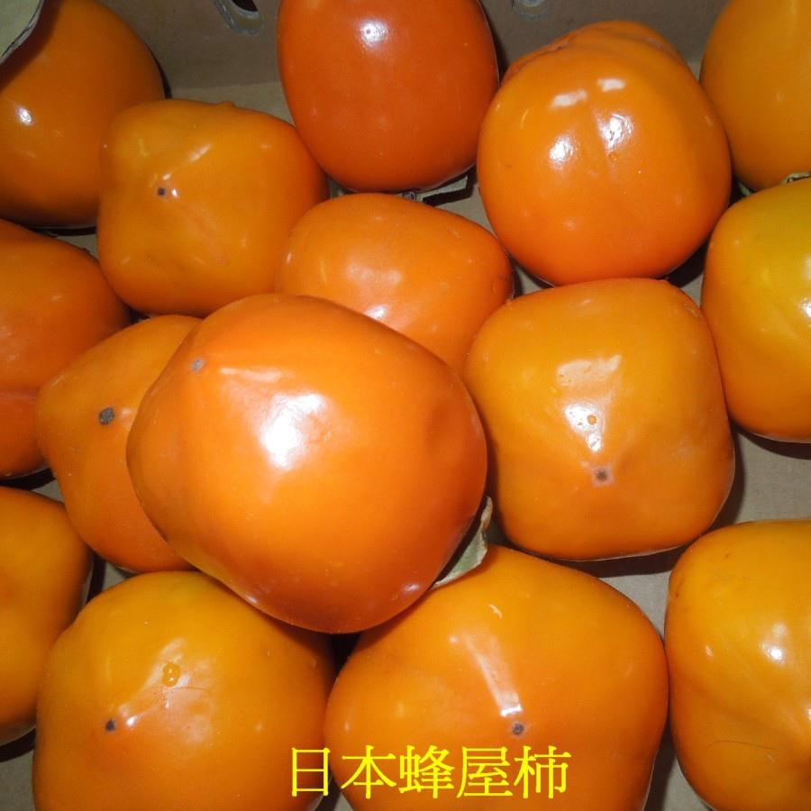 11日本蜂屋柿