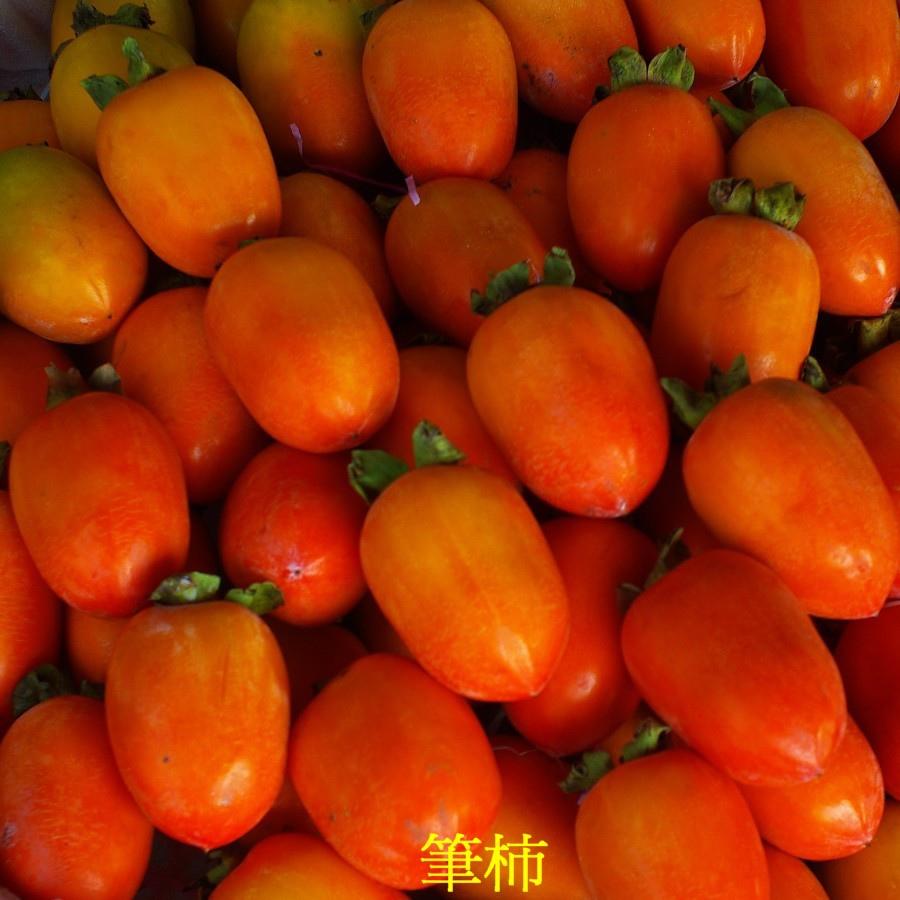 09 筆柿