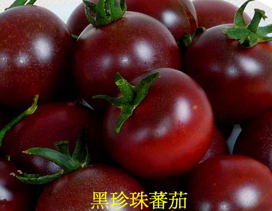19 黑珍珠蕃茄