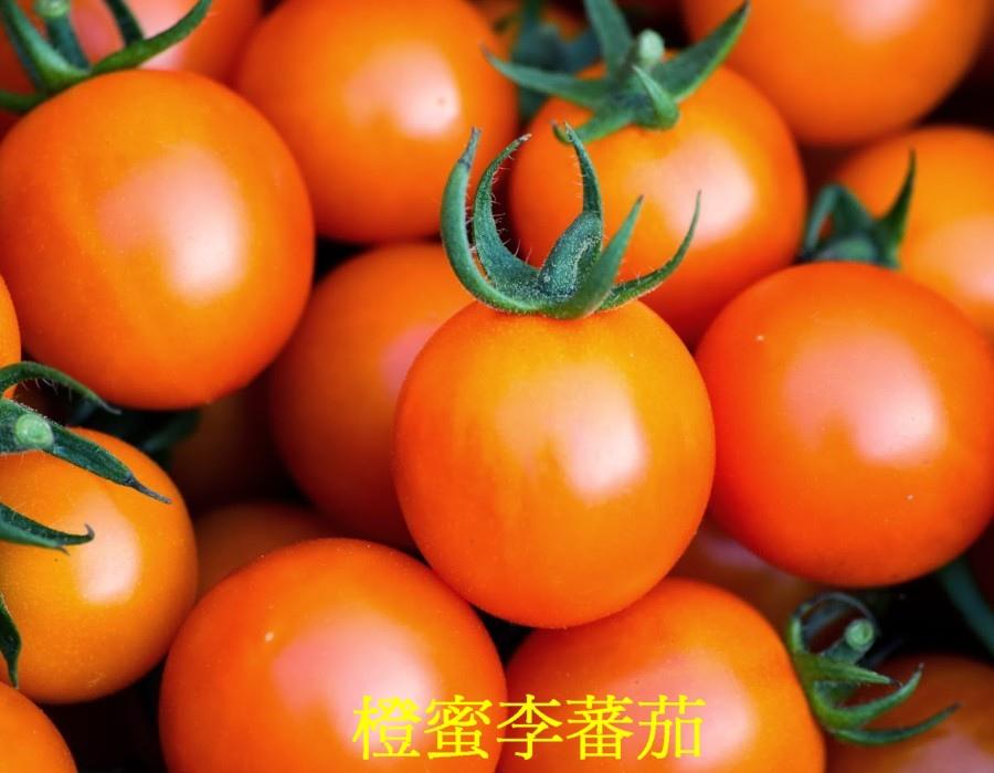 22 橙蜜李蕃茄