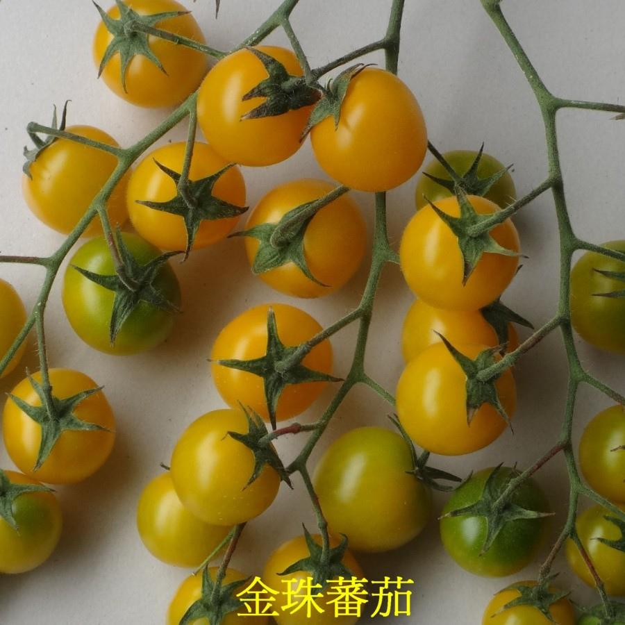 17 金珠蕃茄