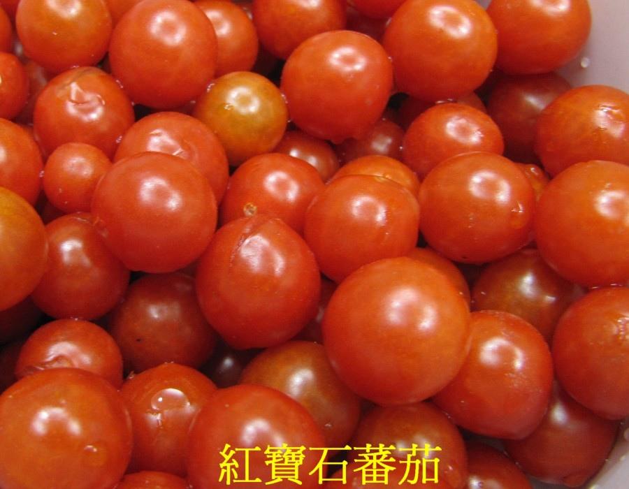 18 紅寶石蕃茄