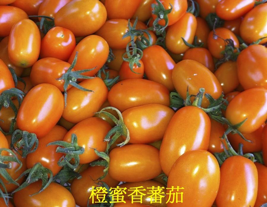 21 橙蜜香蕃茄