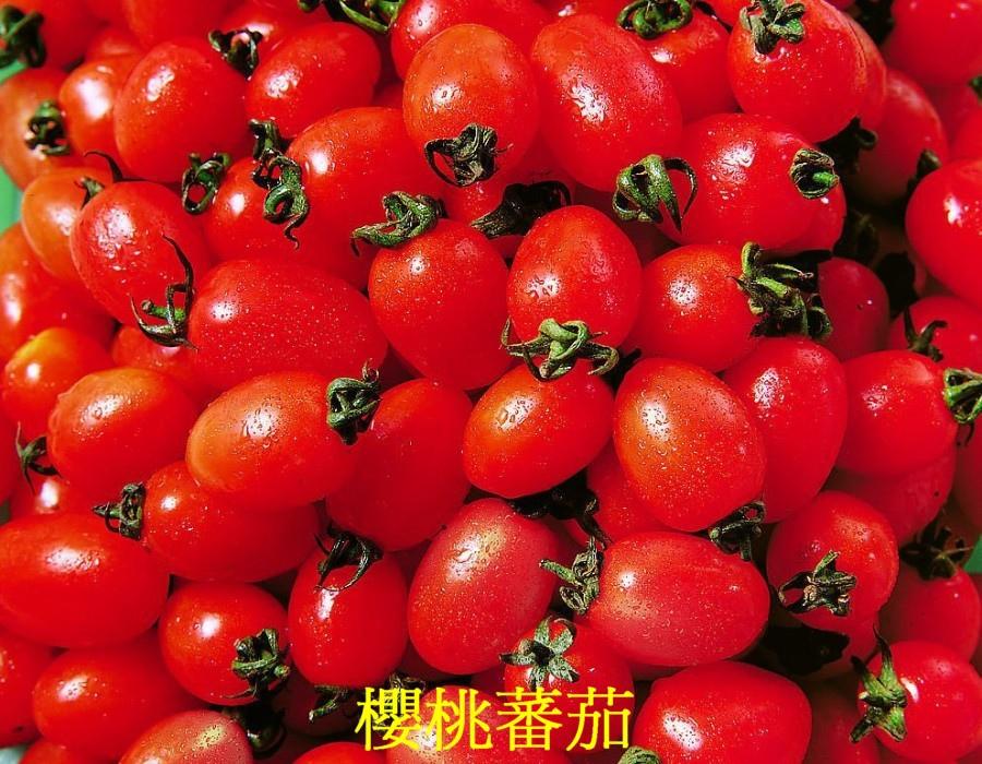 20 櫻桃蕃茄