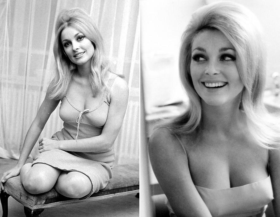 411 Sharon Tate 莎朗.蒂 (1943年-1969年 美國演員)01