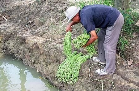 農藥的故事5.bmp
