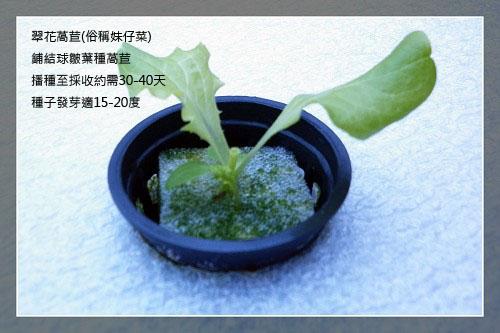 lettuce15day-5.jpg
