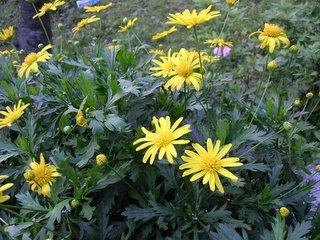 一年一度的台北盛事 - 陽明山花季