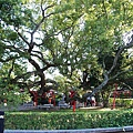 千年樹神-石岡五福臨門神木-3.jpg