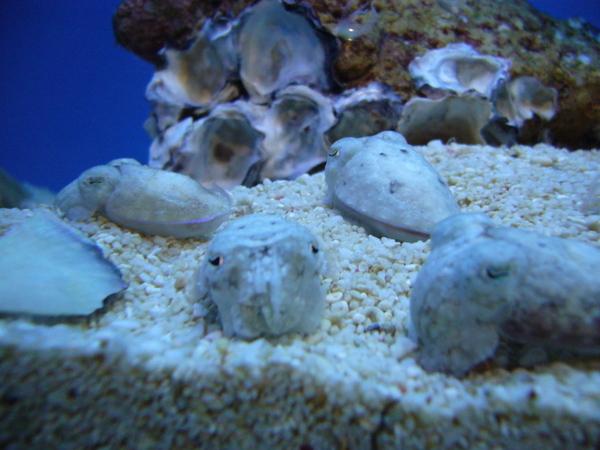 小小章魚  超可愛的