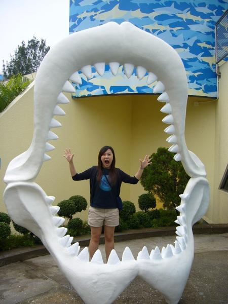 大大的鯊魚嘴巴