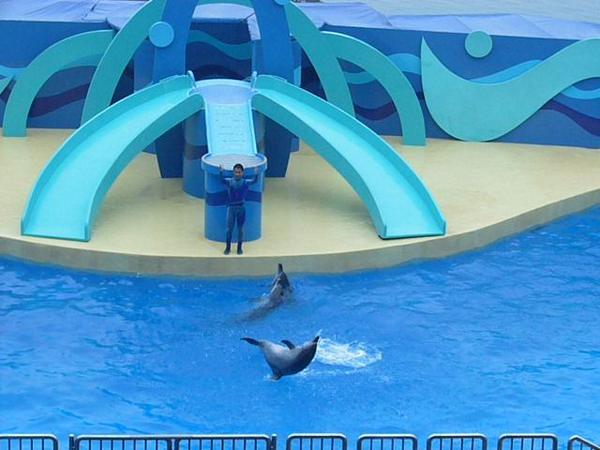 超利害的海豚